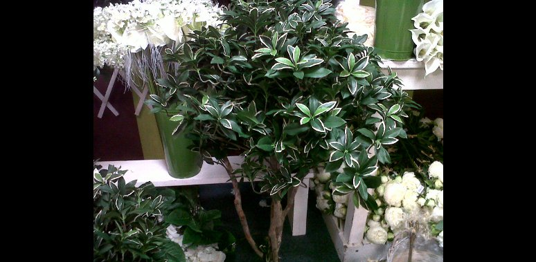 vente plante verte fleurie exotique pornichet la baule. Black Bedroom Furniture Sets. Home Design Ideas