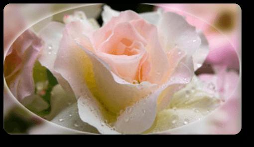 Fleurs fete des meres image - Fete des meres fleurs ...